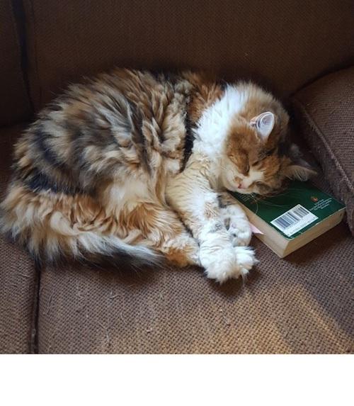 cat wont let me read