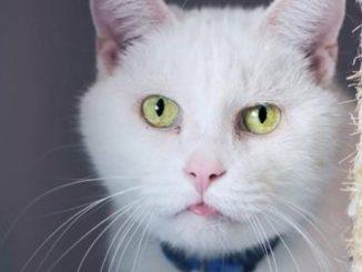 NTCR Cat