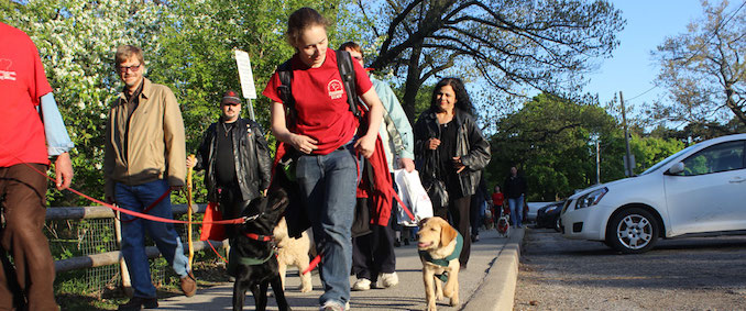 Dog Guides Pet Valu Walk
