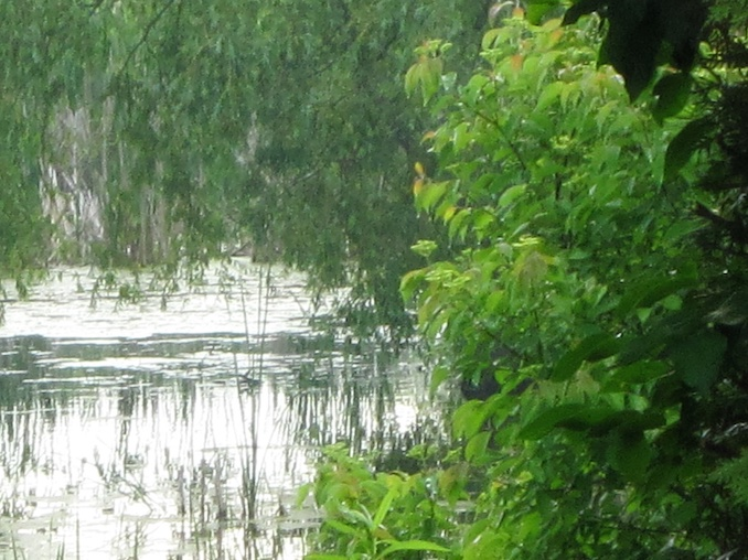A lovely view of the wet lands behind my house. It's a part of the Oak Ridges Moraine and I enjoy the view in the summer and love to watch the geese frolic there.