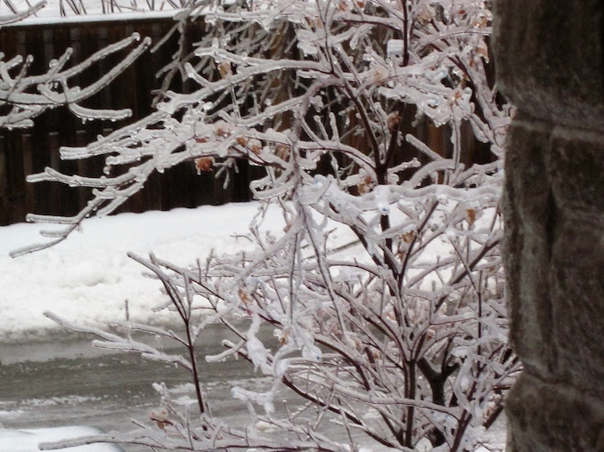 Admiring ice on the trees: One good thing about being a writer you can admire Mother Nature's deeds from indoors!