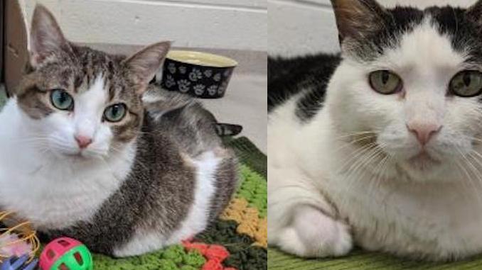 mary precious Cats