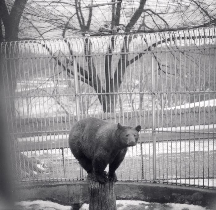 1955 - Riverdale Park; Zoo, bear (brown).