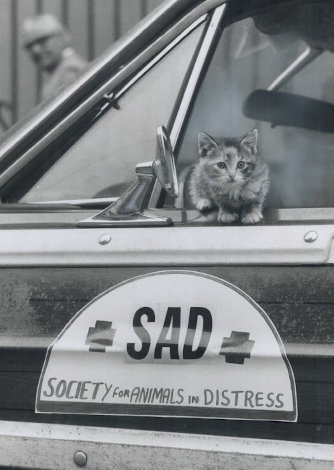 1972 - Geo, Mario - A potential client looks over the new ambulance operated by the society for animals in distress. Around-the-clock service is provided for sick or injured pets in Metro and the surrounding area for a minimum charge of 88