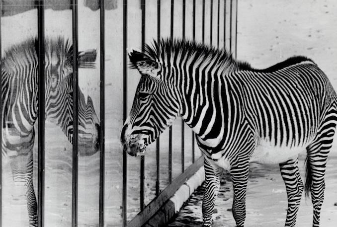 1974 - Canada - Ontario - Toronto - Zoos - Metro Toronto Zoo