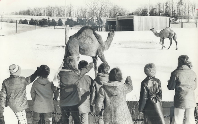 1974 - This is the first winter in a cold climate for many of the animals at Metro's zoo