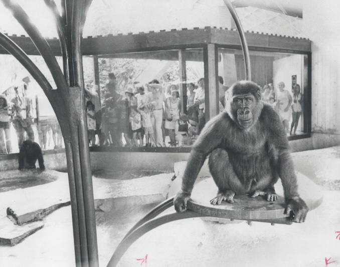 1976 - Canada - Ontario - Toronto - Zoos - Metro Toronto Zoo - Animals - Monkeys