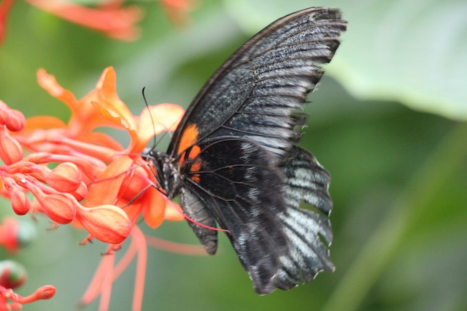 At the Butterfly Conservatory in Niagara Falls