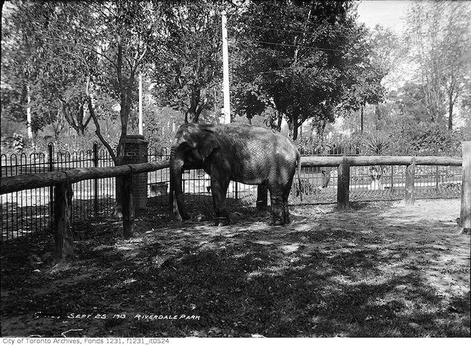 1913 - September 25 - Riverdale Zoo, elephant