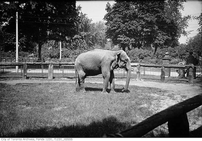 1922 - Riverdale Zoo, elephant