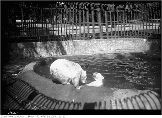 1926 - July 14 - Riverdale Zoo - Polar bears