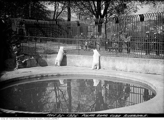 1926 - May 26 - Polar bear cubs, Riverdale Zoo