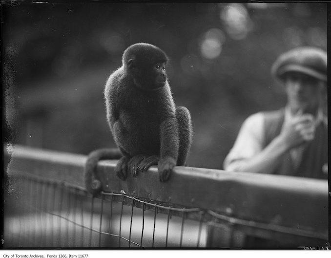 1927 - September 20 - Riverdale Zoo, woolly monkey