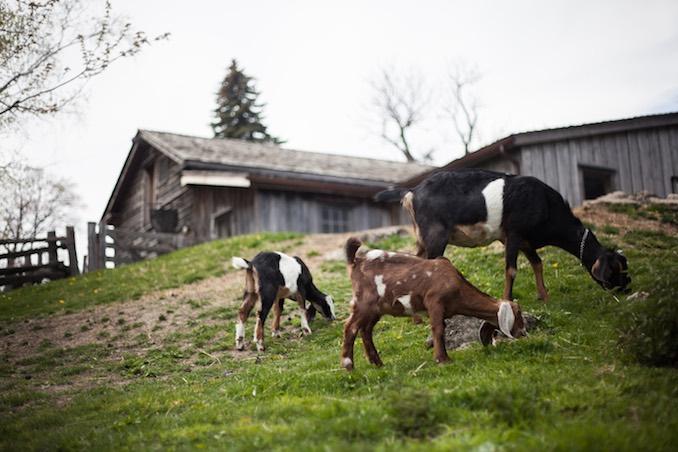 Riverdale Farm - 2016 - Photo by Joel Levy