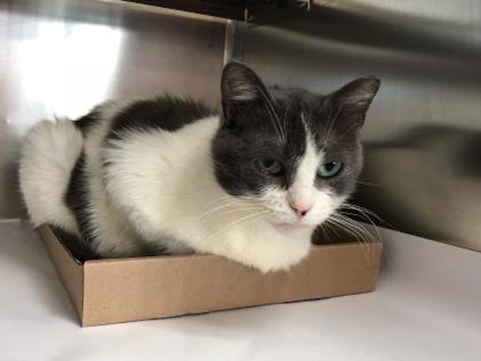 Dowling cat toronto humane society