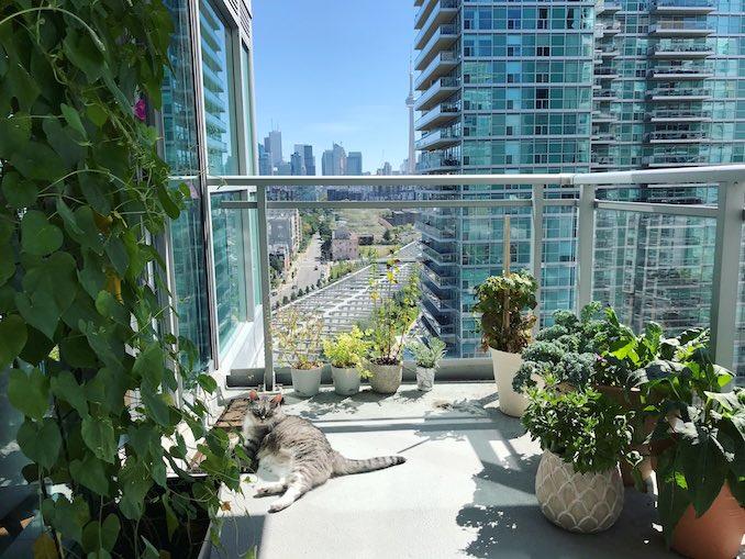I love growing stuff on my balcony.