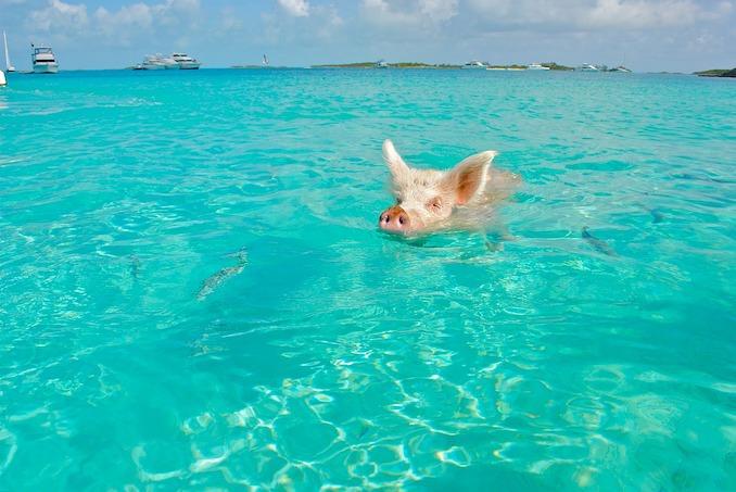 Bahamas Photo by Lisa Larsen / CC0