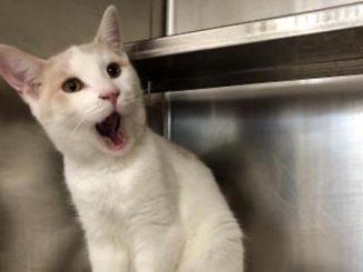 casper cat toronto