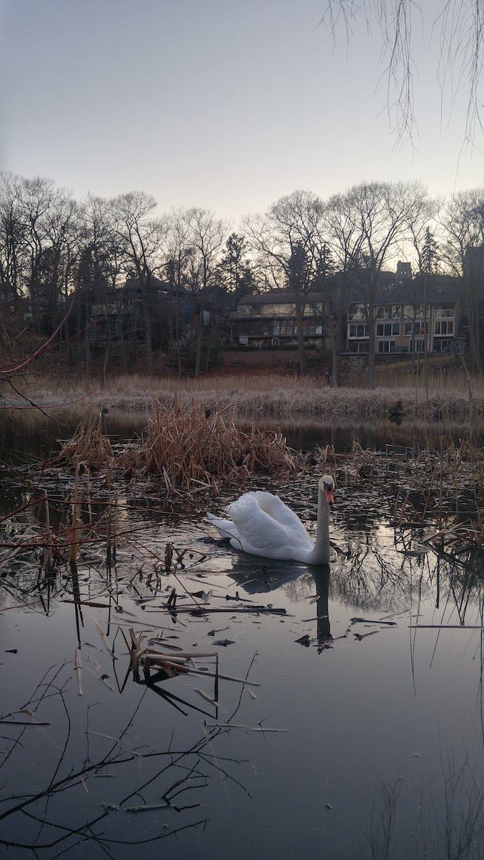 High Park: I live very close to High Park, I love going for a walk watch the beautiful birds, specially the swans!