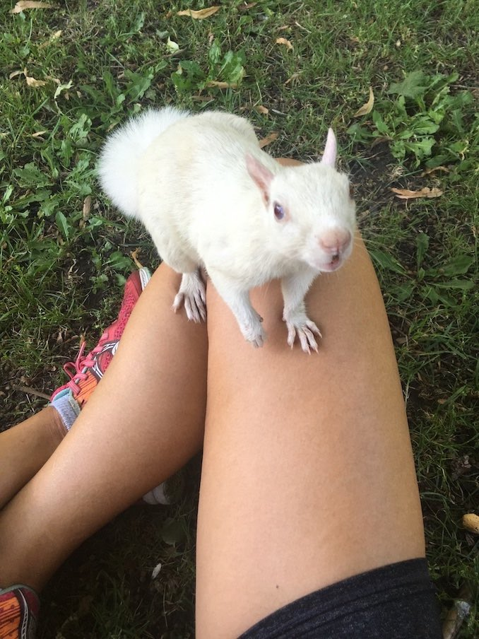 I'm an avid jogger. Instead of sharing a photo of me on a treadmill, this is a photo from the summer, taken post-run, when one of the white squirrels of Trinity Bellwoods Park befriended me.