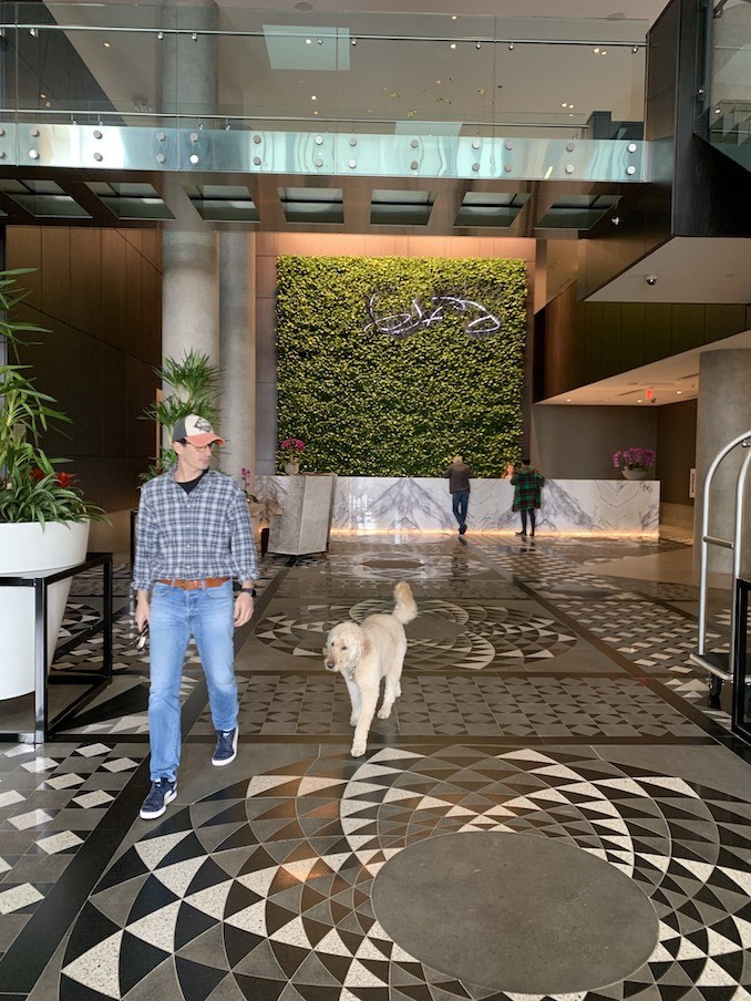 Taking a stroll with Junior through the lobby of Hotel X Toronto (it's pet-friendly!).
