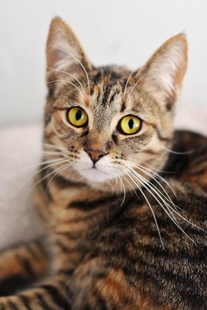 Aurora the cat is looking for a new place to live in the Toronto area