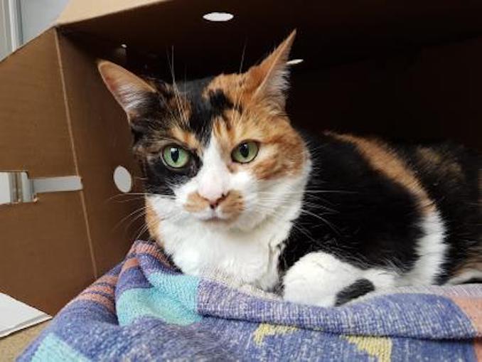 peachy cat toronto