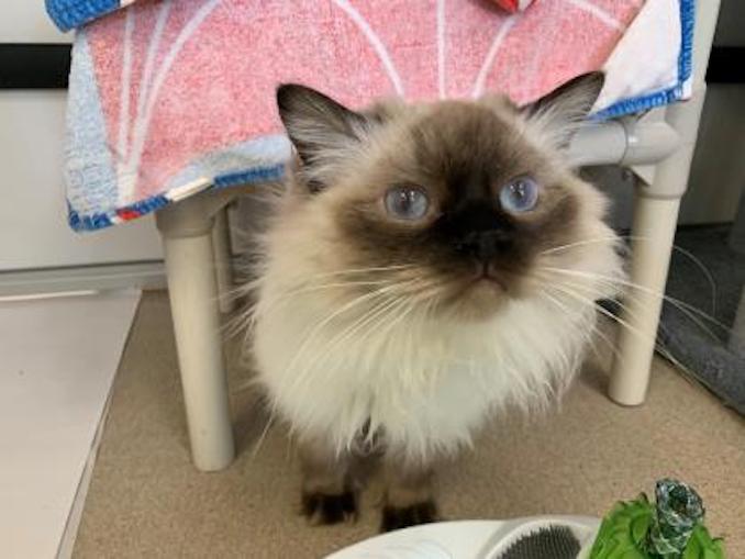 jasper the cat at the toronto humane society
