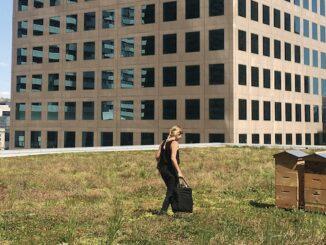 Alvéole's Urban Beekeeping