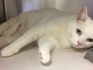 Pearl Cat Toronto