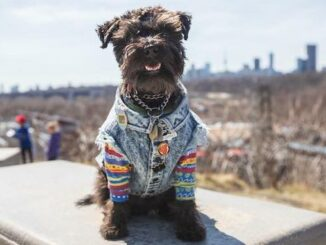 Top 10 trails to take your dogs for a hike in Toronto
