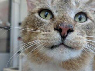gregor cat toronto