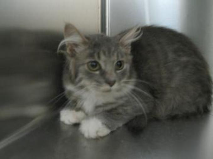 Leona the cat needs a new place to live in the Toronto area