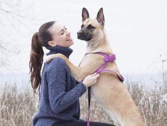 Strange encounters and Toronto's animal communicator 'Modern Day Dr. Doolittle'