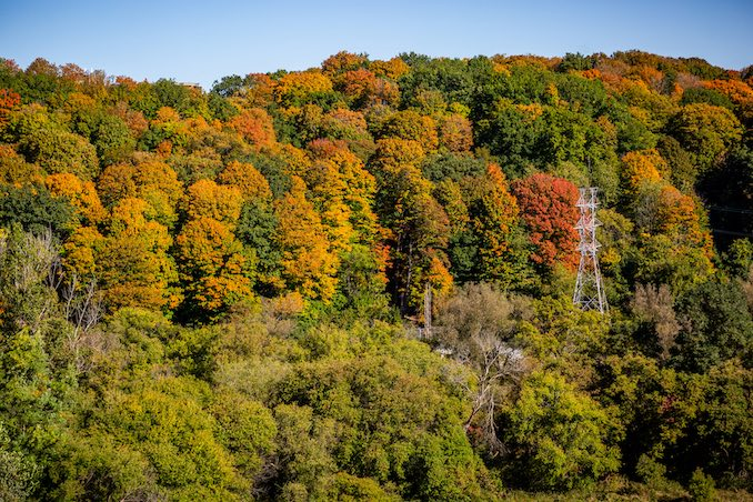 Ontario Parks Website Shows When the Leaves Change Colour in Ontario