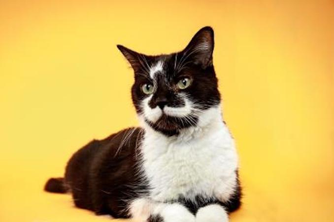 Queen Cat Toronto