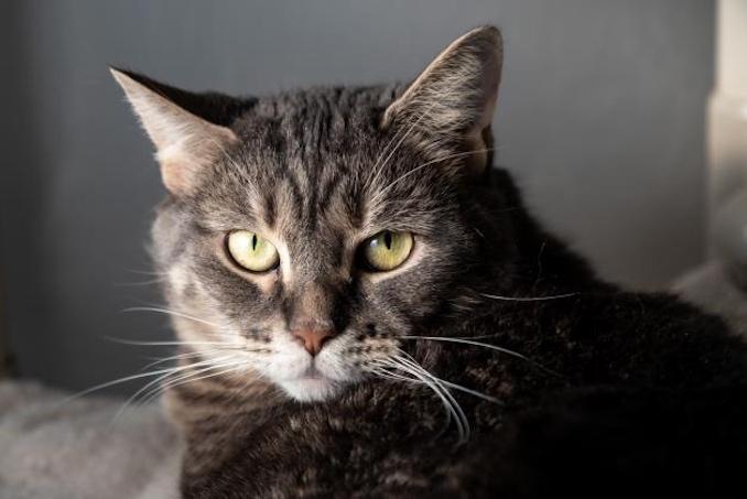 Sabrina cat toronto