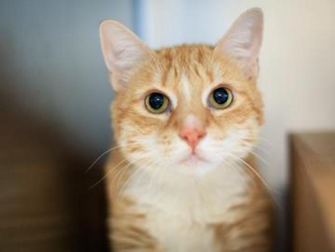 Sassy cat toronto