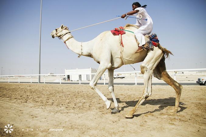 A camel trainer in Zekreet, Qatar