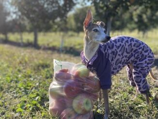 Ontario Apple Orchards & Pumpkin Patches that are Dog Friendly