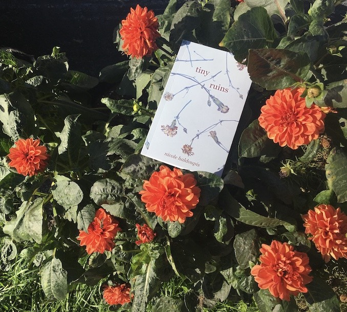 My debut novel Tiny Ruins looking pretty with some dahlias in front of the house down the street.