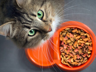 6 Signs You May Need To Change Your Cat's Food