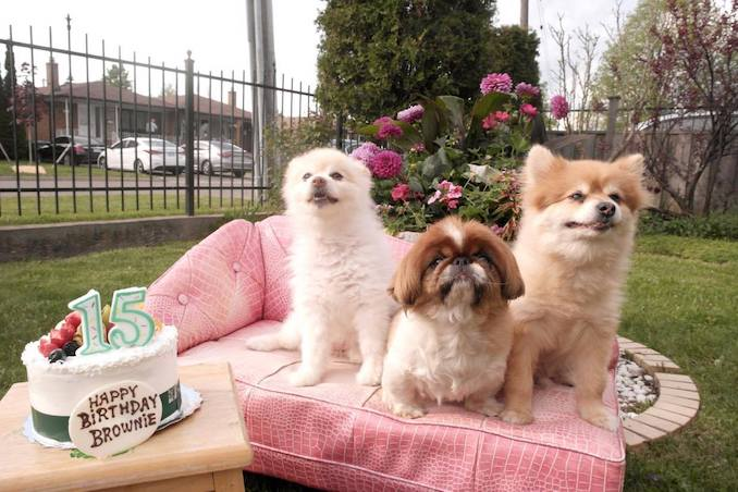 My dogs Bebe, Brownie and Junior on Brownie's 15th Birthday