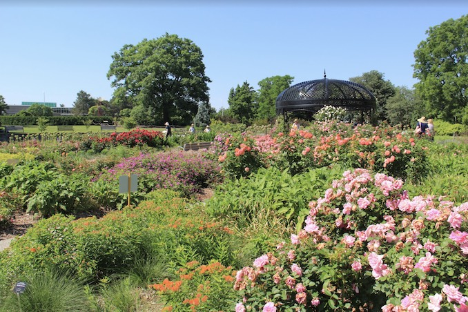 The History of the Royal Botanical Gardens